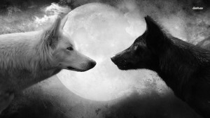 19358-a-black-and-a-white-wolf